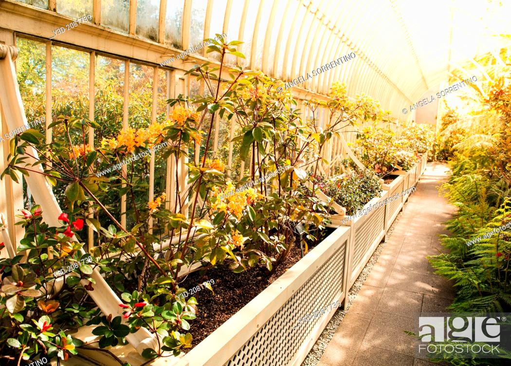 Imagen: Greenhouse of the Botanical Garden, Dublin.