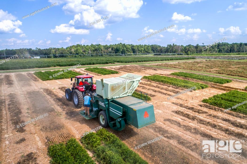 Stock Photo: Aerial view of combine harvester driving up row to collect dried peanuts, Tifton, Georgia. USA.