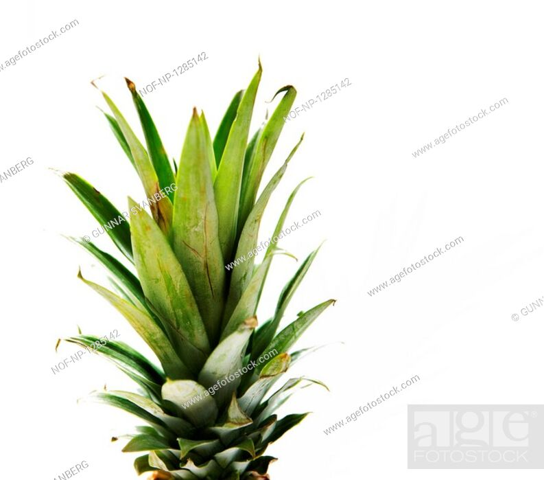 Stock Photo: Leaves of a pineapple.