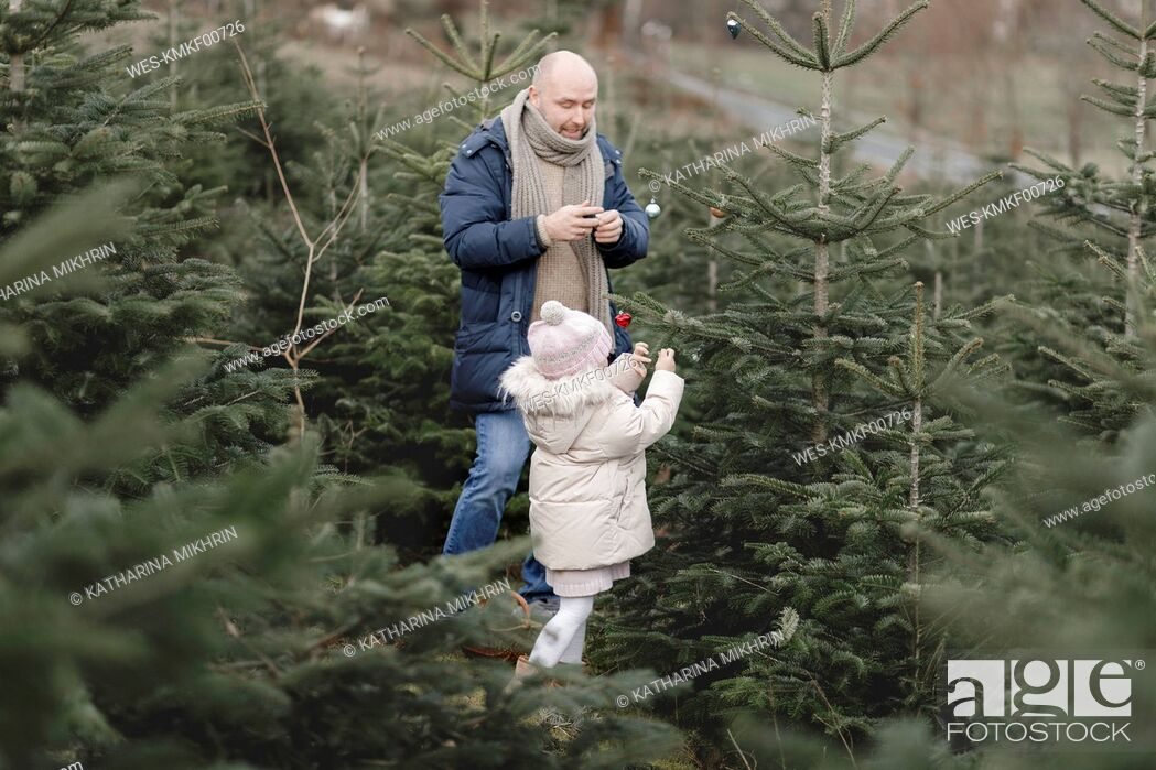 Stock Photo: Father and daughter decorating Christmas tree on a plantation.