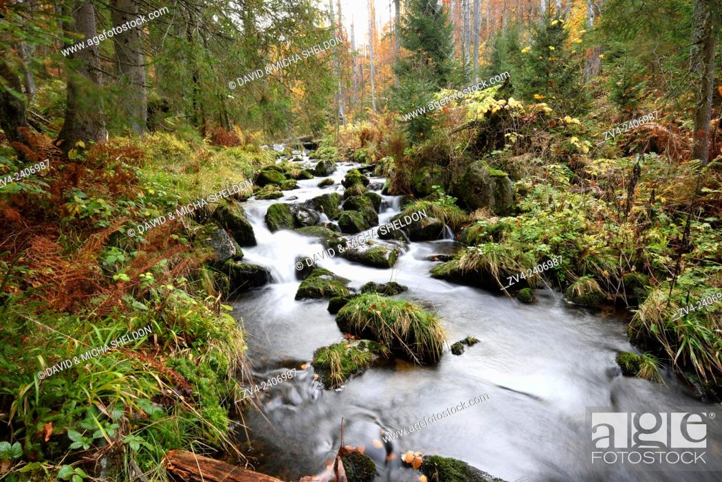 Stock Photo: Landscape of a little River (Keine Ohe) flowing through the forest in autumn in the Bavarian forest, Bavaria, Germany.