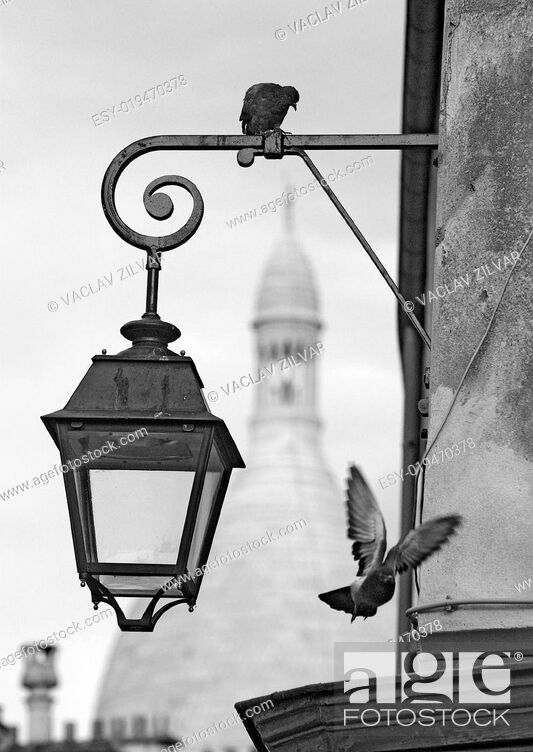 Stock Photo: Montmartre pigeons.