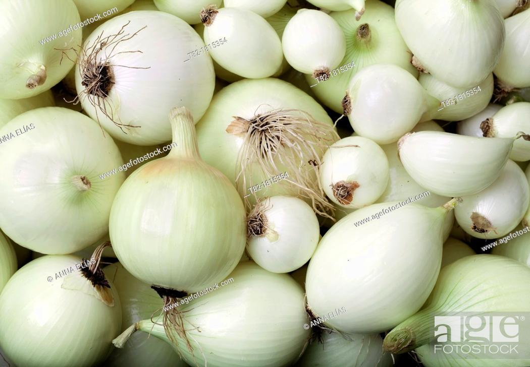 Stock Photo: multitus white onion Allium ascalonicum of various sizes.