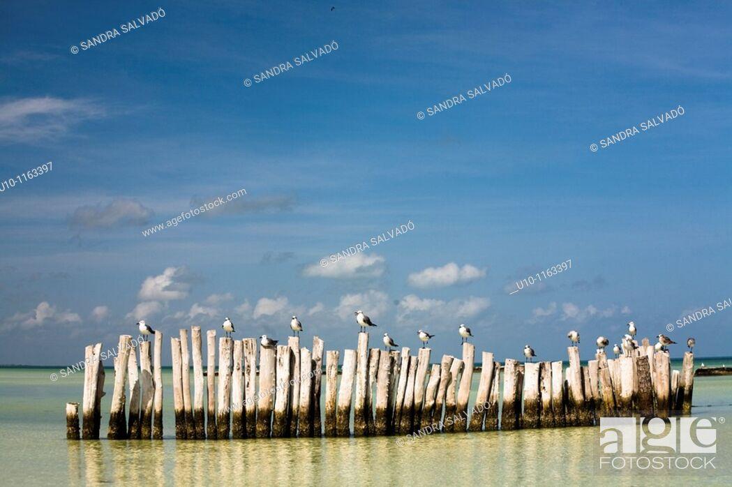 Stock Photo: Holbox Island, Yucatán, México.