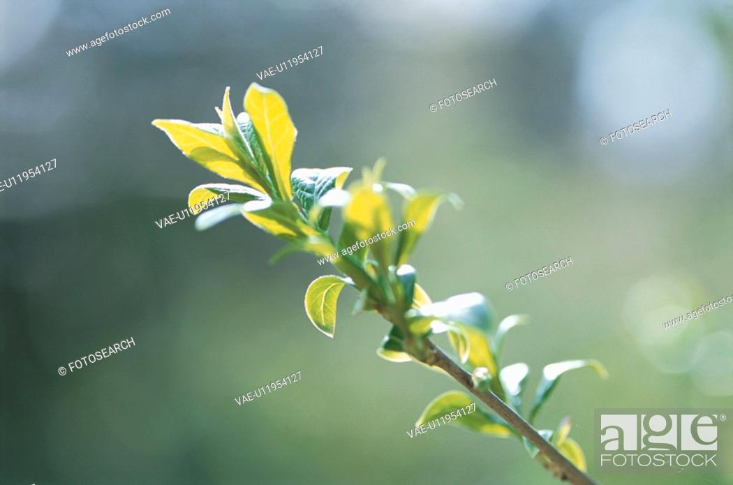 Stock Photo: Spring Branch.