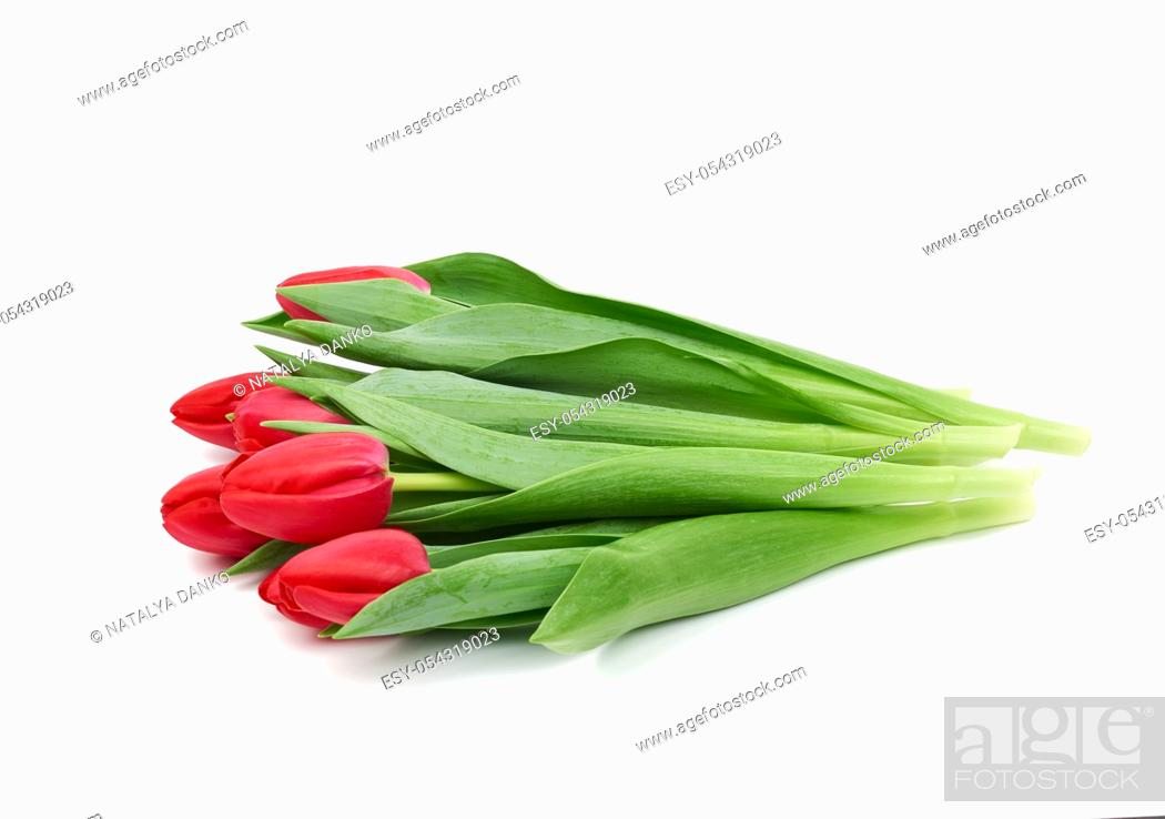 Stock Photo: bouquet of fresh red blooming tulips with green leaves and stem isolated on white background with shadow, element for florist and designer, greeting flowers.