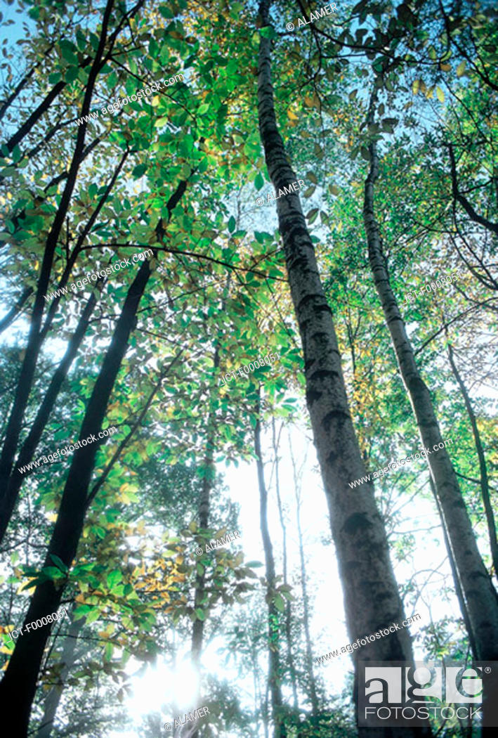 Stock Photo: France, the Cannelles forest.