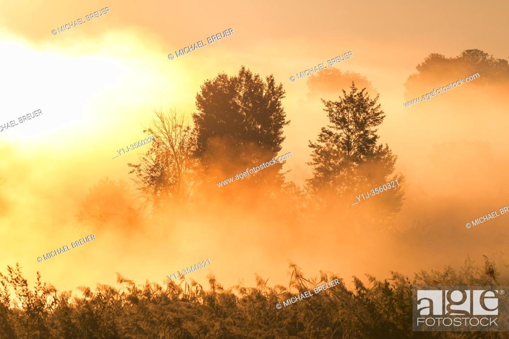 Stock Photo: Trees on early morning mist at sunrise, Hesse, Germany, Europe.