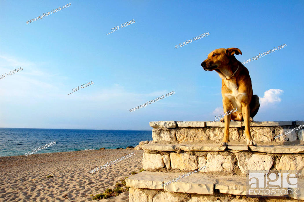Stock Photo: Dog looking to the sea. Greece.