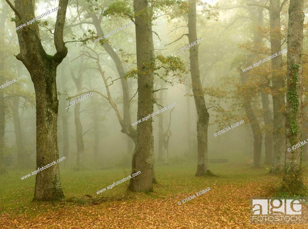 Stock Photo: Fog. Montes de Albertia. Álava province. Spain.