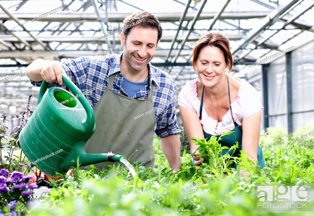 Stock Photo: Germany, Bavaria, Munich, Mature man and woman watering rocket plant in greenhouse.
