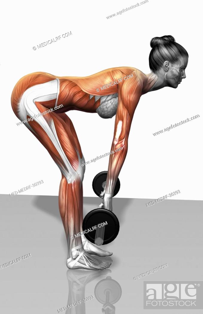 Stock Photo: Barbell bent over row exercises Part 2 of 2.