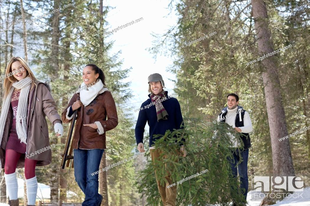 Stock Photo: Friends carrying fresh cut Christmas tree in woods.