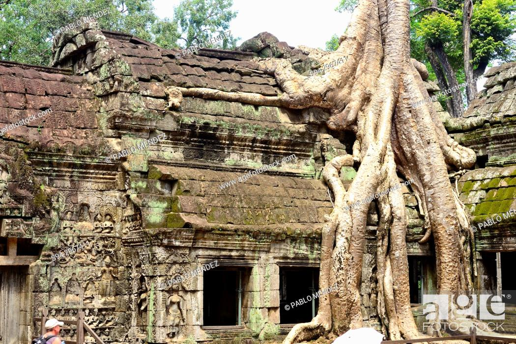 Stock Photo: Ta Prohm temple, Angkor Wat area, Siem Reap, Cambodia.