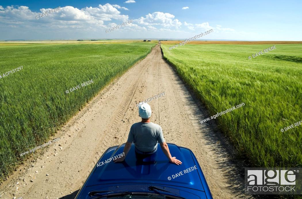 Imagen: a man sits on a farm truck looking out over a gravel road with durum wheat and barley fields on the side, near Ponteix, Saskatchewan, Canada.