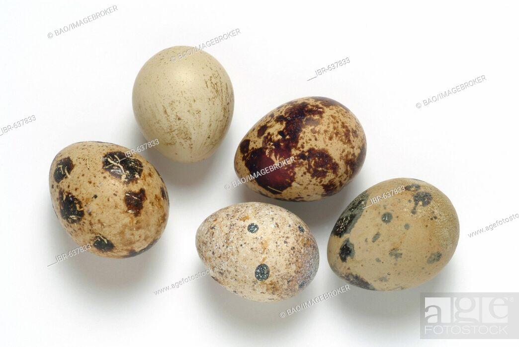 Stock Photo: Quail eggs.