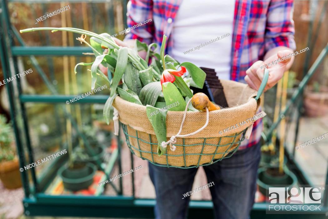 Stock Photo: Close-up of man holding basket with flowers before greenhouse in garden.