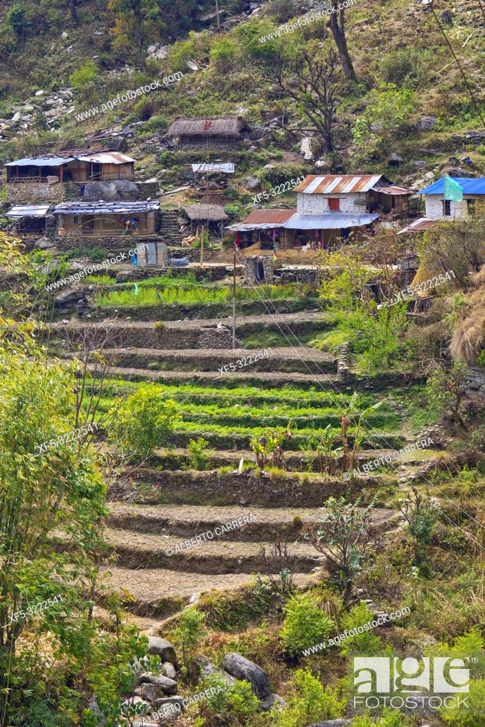 Stock Photo: Agricultural Landscape, Terrace Cultivations, Trek to Annapurna Base Camp, Annapurna Conservation Area, Himalaya, Nepal, Asia.