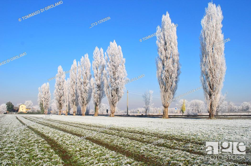 Stock Photo: Winter landscape, Lombardy, Italy.
