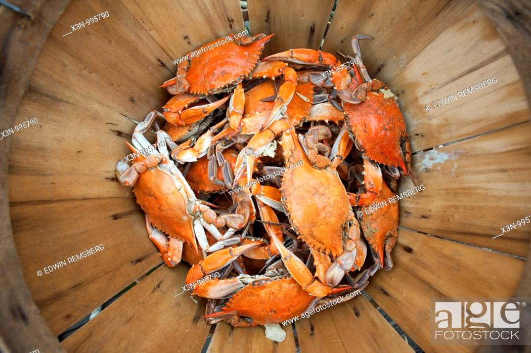 Stock Photo: Steamed Crabs on the eastern shore of Maryland USA.