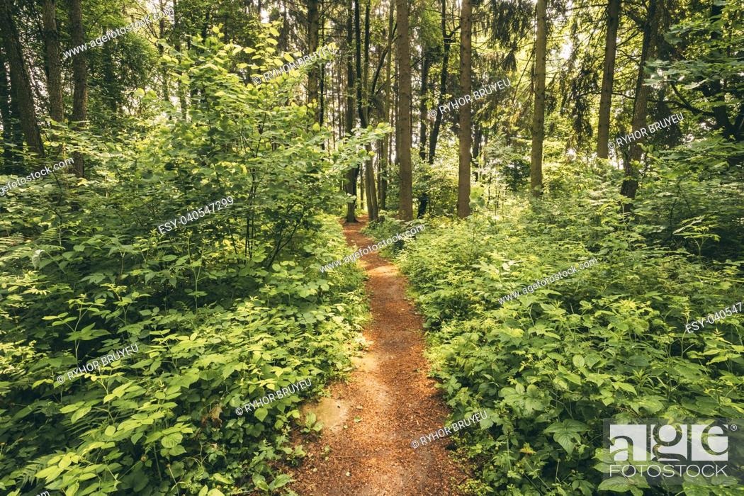Stock Photo: Beautiful Path Lane Walkway Way In Summer Forest Park. Healthy Walking In Park Between Woods, Trees And Green Bushes.