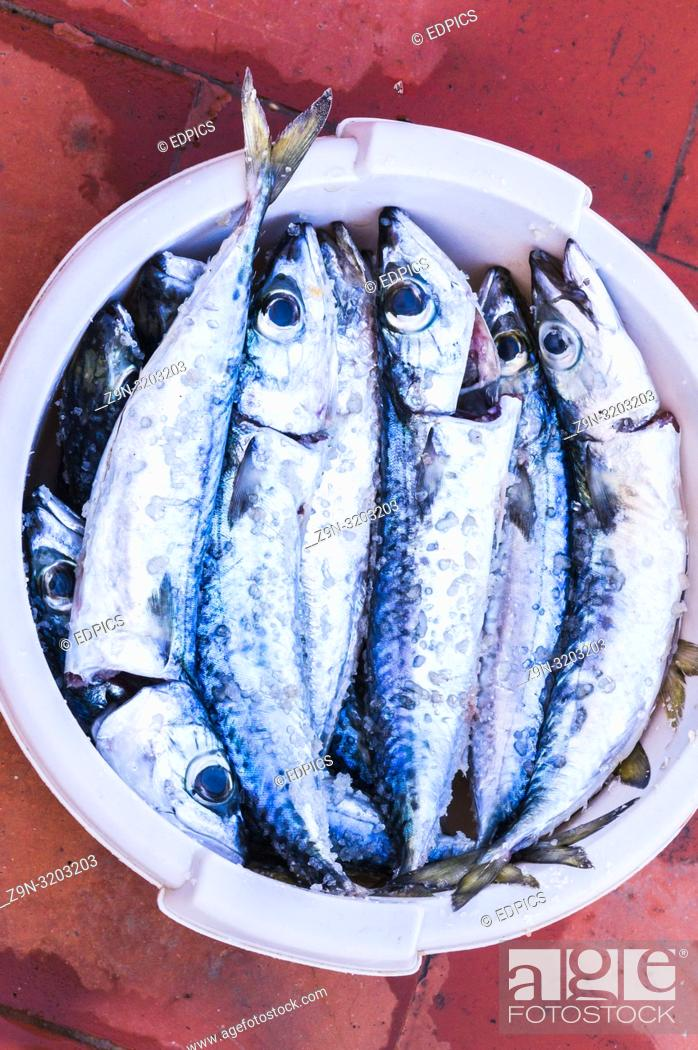 Stock Photo: various mackerels in a bowl, cleaned and ready for grilling, algarve, portugal.