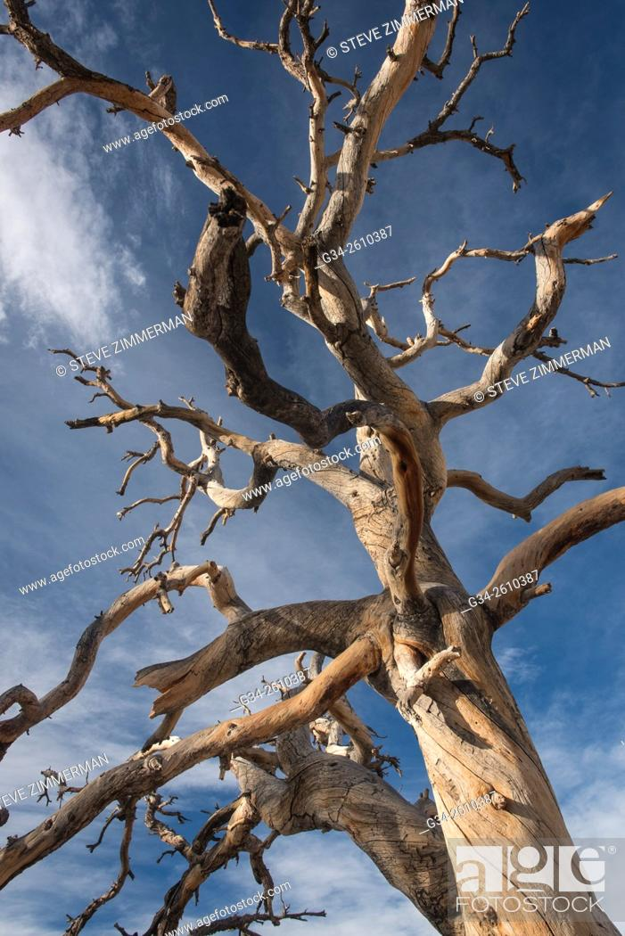 Stock Photo: Tough Life in Joshua Tree 2.