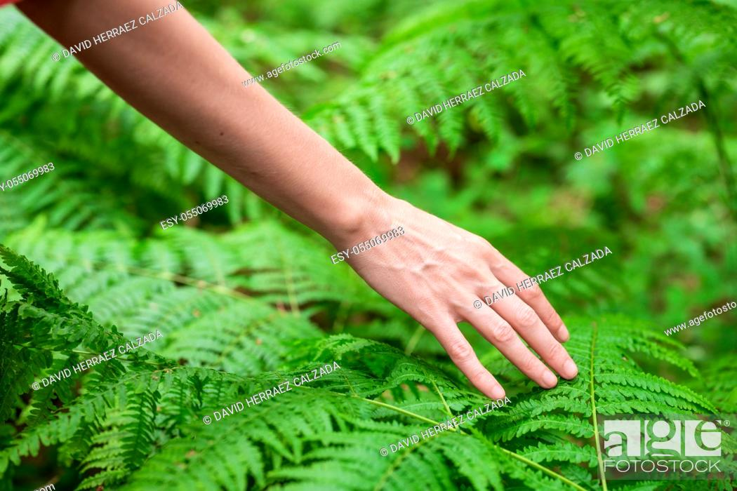 Stock Photo: Female hand, with long graceful fingers gently touches the plant, leaves of fern. Close-up shot of unrecognizable person. High quality image.