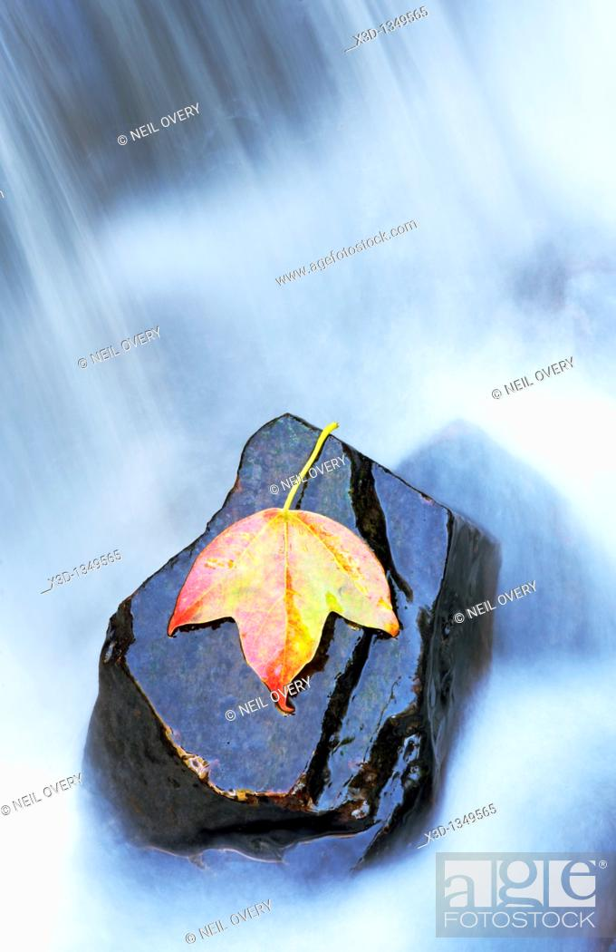 Stock Photo: Leaf in Water.