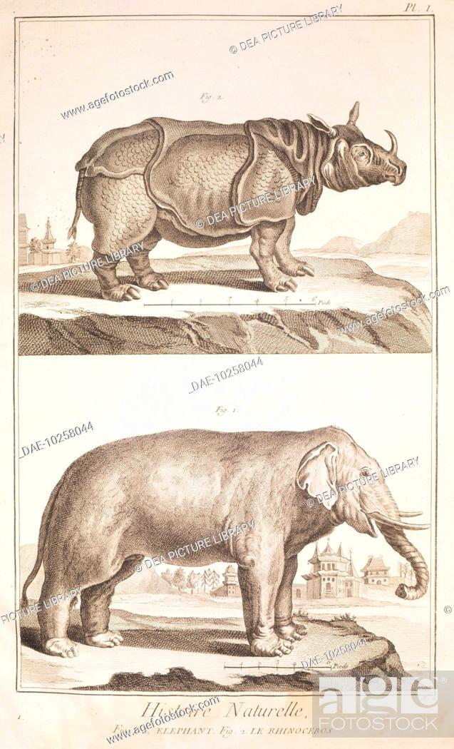 Stock Photo: Plate showing rhinoceros and elephant. Engraving from Denis Diderot, Jean Baptiste Le Rond d'Alembert, L'Encyclopedie, 1751-1757.