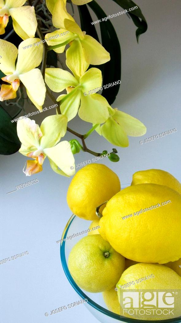 Stock Photo: Lemons and orchids.