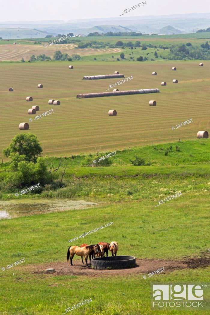 Stock Photo: Gregory County, South Dakota - Horses drink at a water tank made from an old tire.