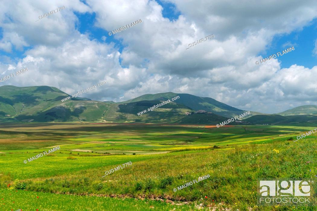 Stock Photo: Monti Sibillini National Park, Flowering, Castelluccio di Norcia; Umbria, Italy, Europe.