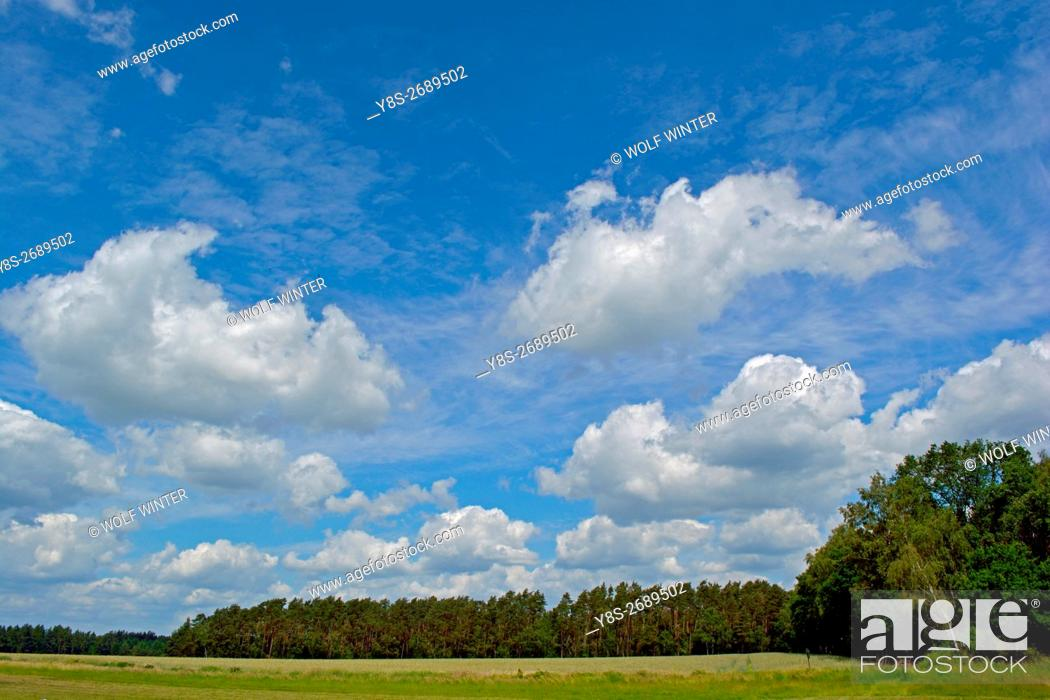 Stock Photo: Sky and clouds above a forest at Wilsche, Gifhorn, Lower Saxony, Germany.