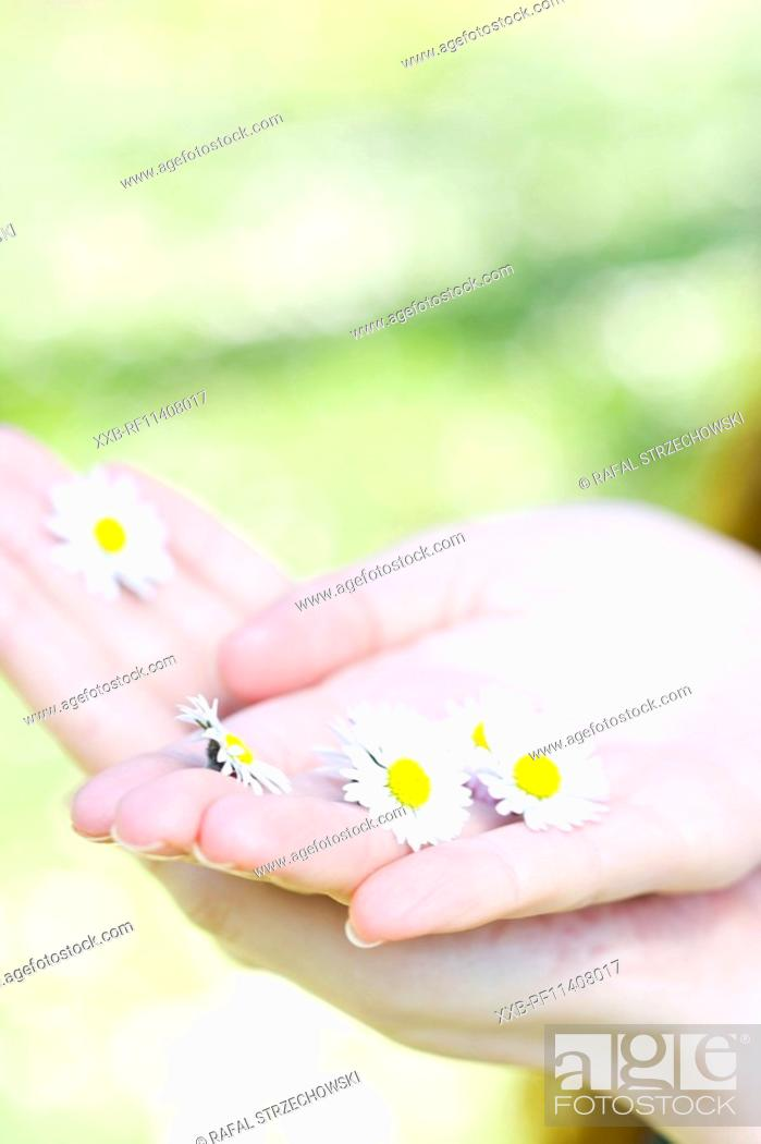 Stock Photo: Girl picking up flowers.