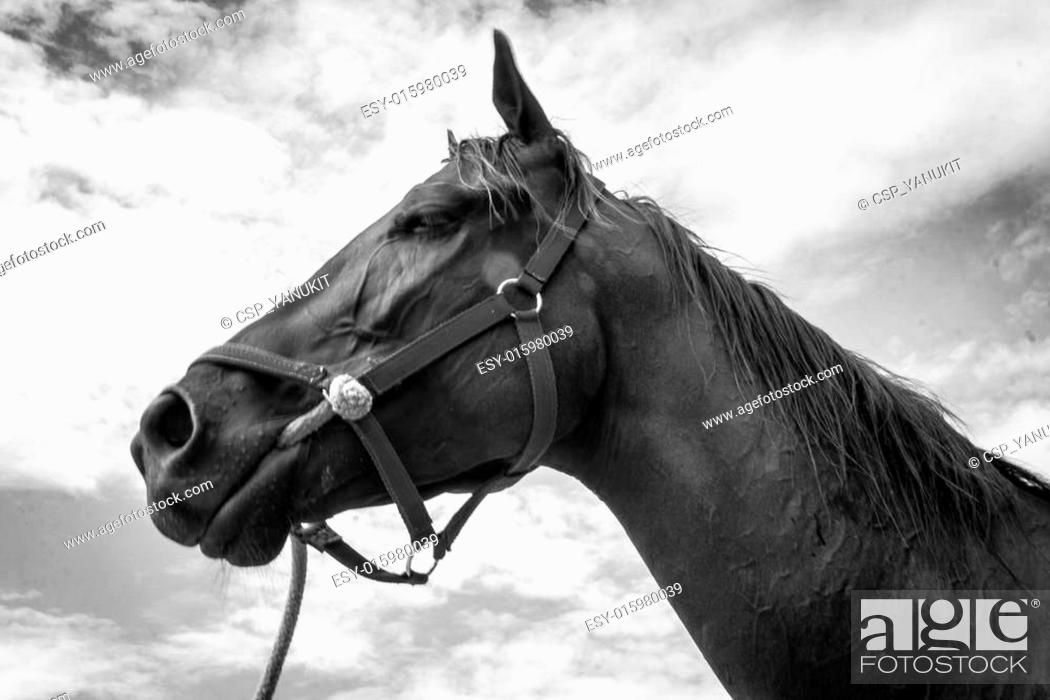 Close Up Head Of Horse Side View On Cloudy Background Black Wh Stock Photo Picture And Low Budget Royalty Free Image Pic Esy 015980039 Agefotostock