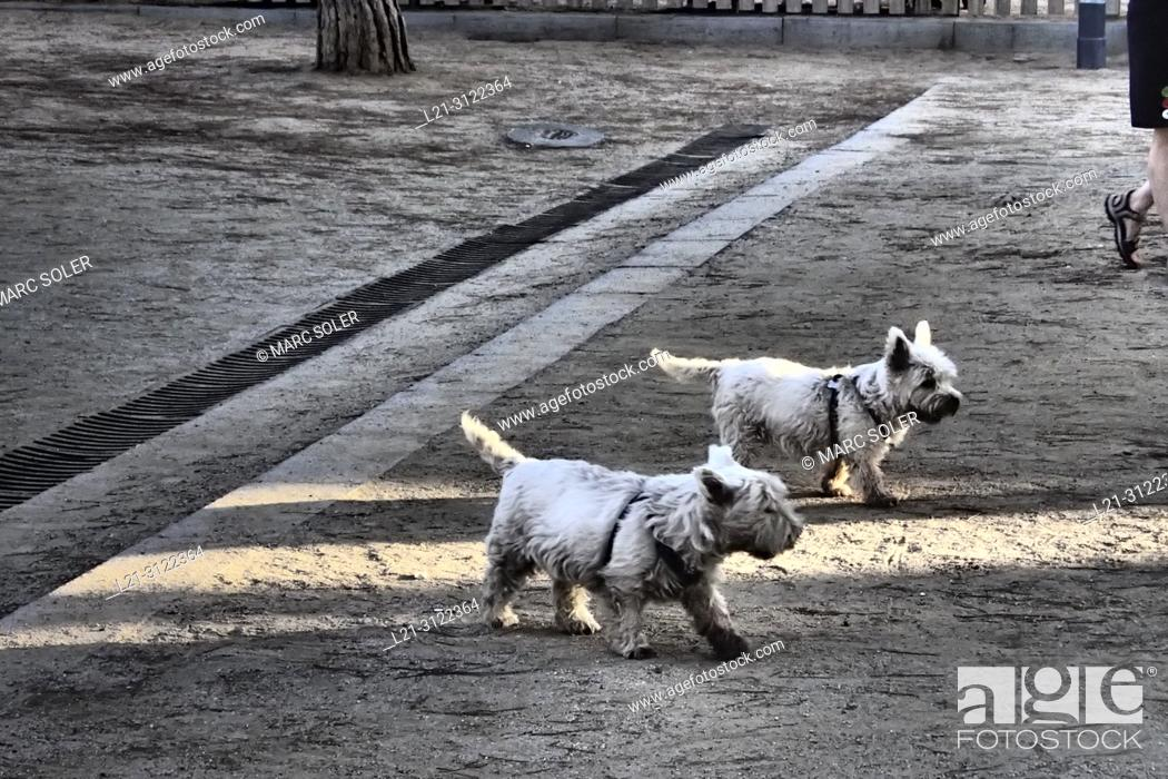 Stock Photo: Two dogs on the street. Barcelona, Catalonia, Spain.