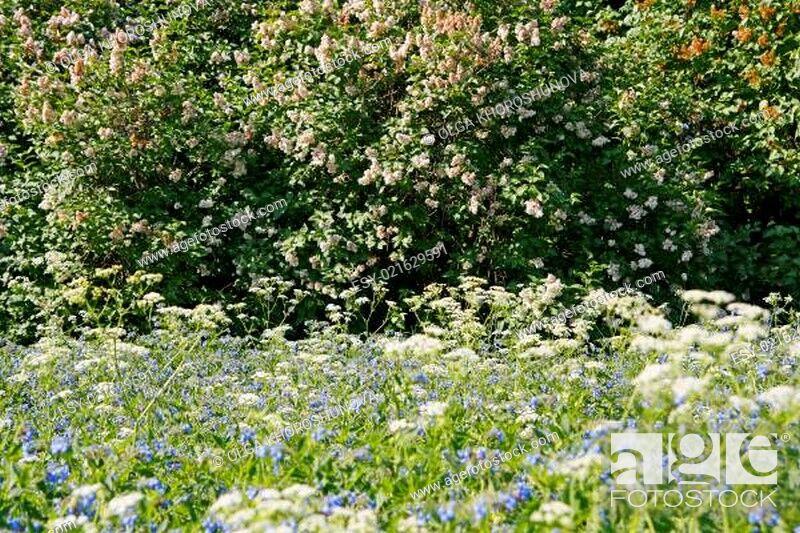 Photo de stock: meadow.