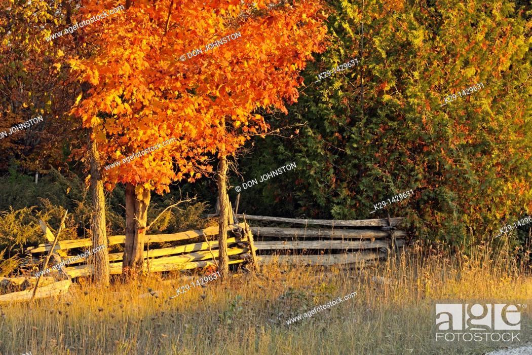 Stock Photo: Split-rail fence and maple trees Manitoulin Island Ontario.