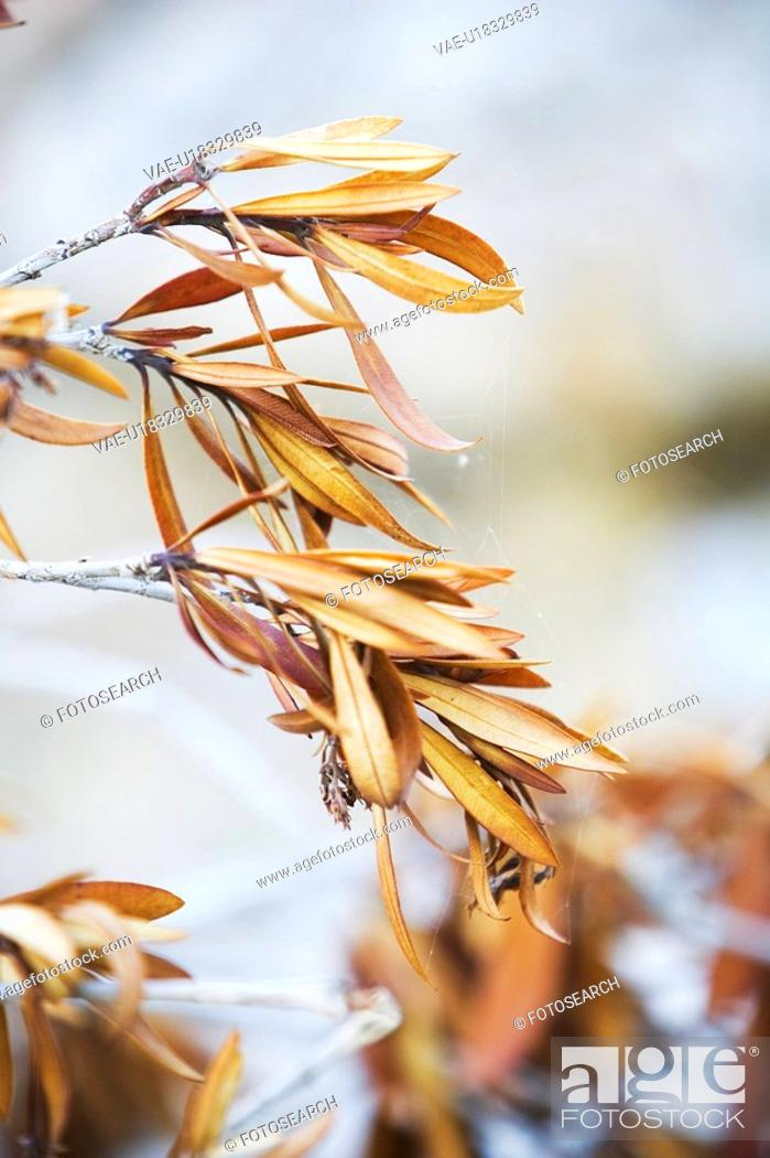 Stock Photo: Blurred, Branch, Calm, Close-Up, Grow.