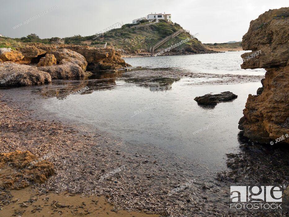 Stock Photo: Cala Tirant. Menorca. Islas Baleares. Spain. Europe.
