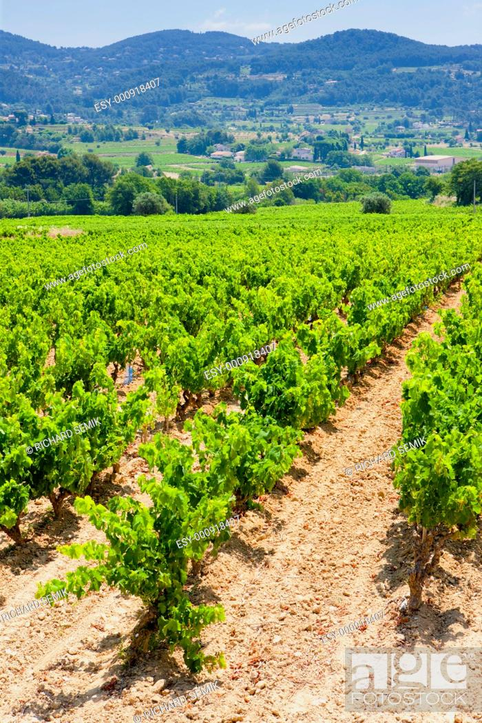 Stock Photo: vineyards near La Cadiere d'Azur, Provence, France.