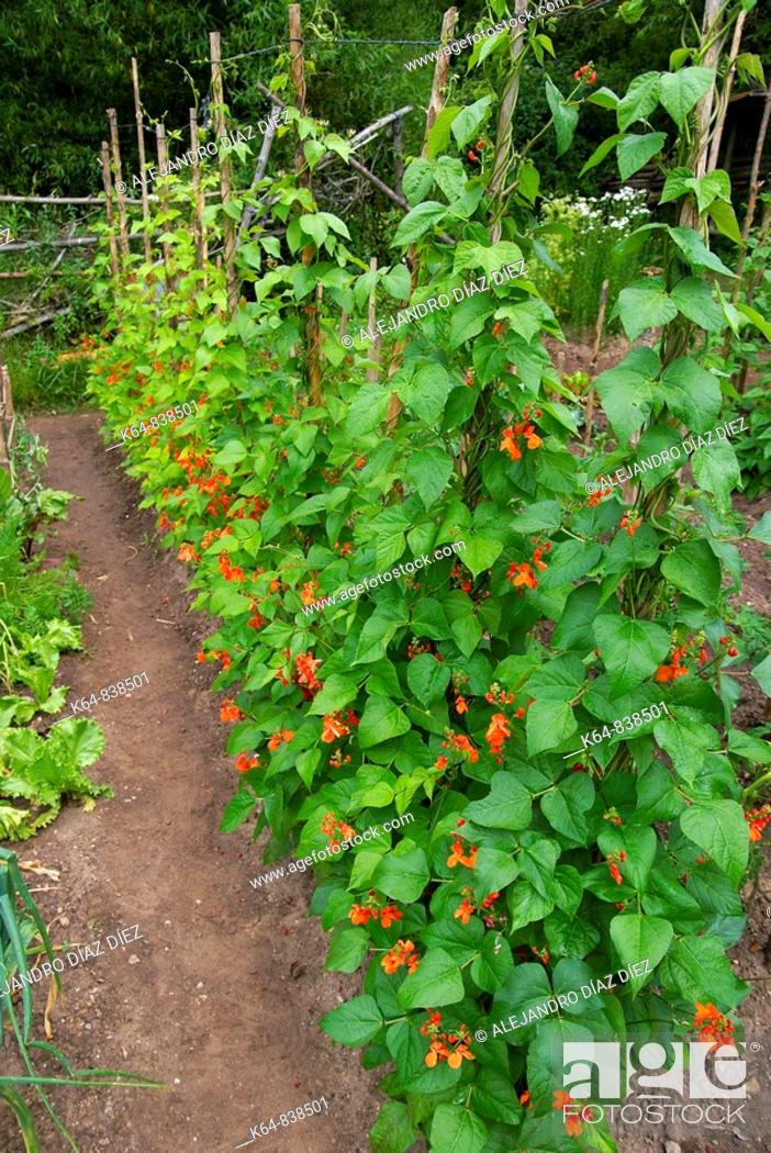 Stock Photo: Kitchen garden. Canicosa de la Sierra, Burgos province, Castilla-Leon, Spain.