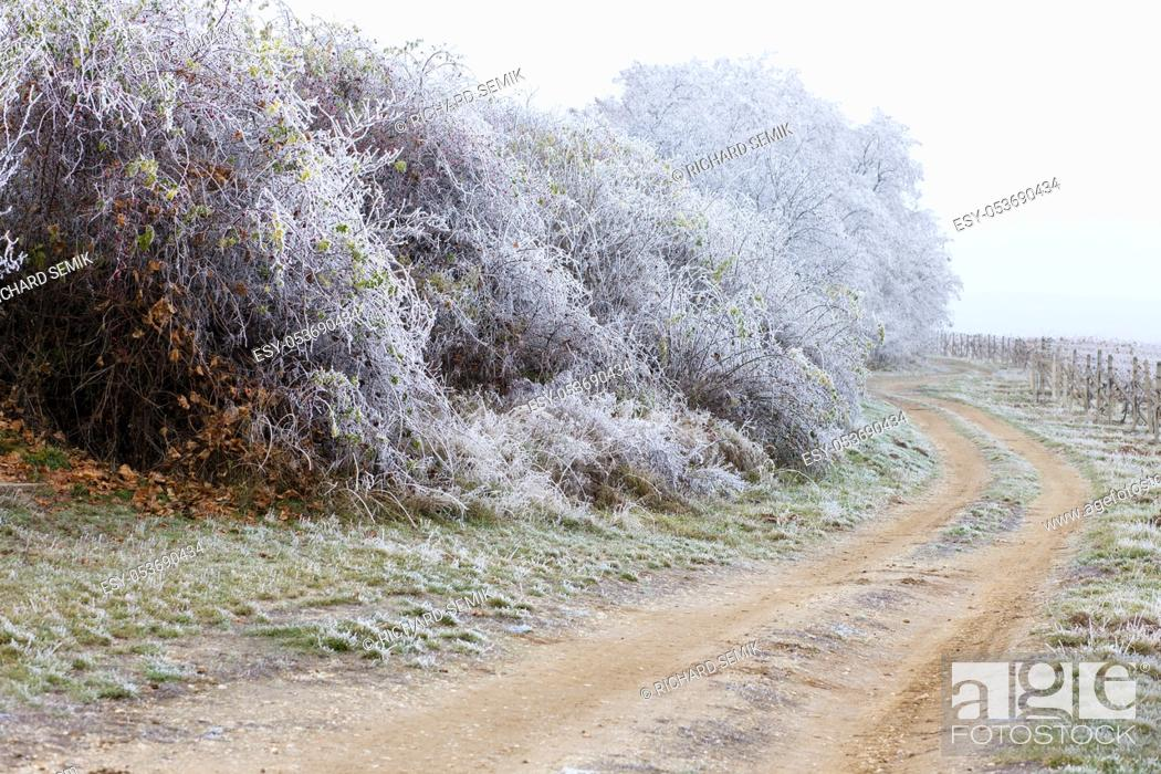 Stock Photo: winter landscape, Moravia region, Czech Republic.