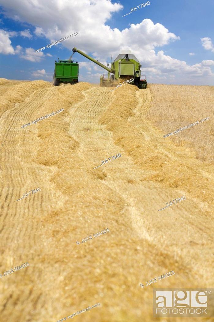 Stock Photo: Harvester in barley field.