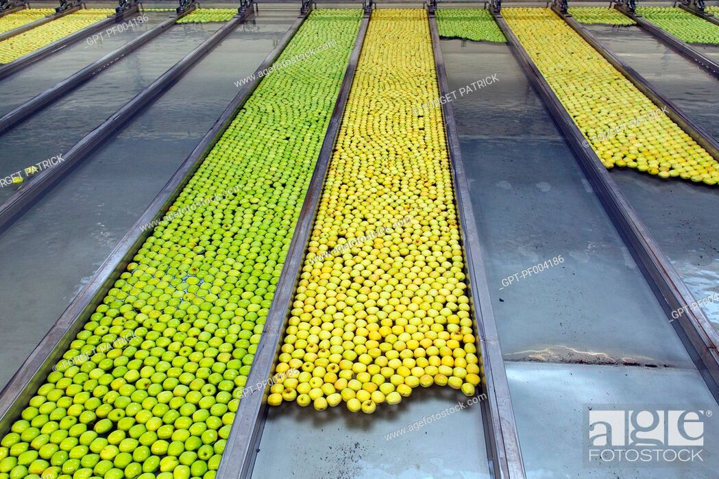 Stock Photo: FLOATING RAILS FOR SORTING BY SIZE AND COLOR, LIMBOR ORGANIC COOPERATIVE, FRUIT-PRODUCING STATION, APPLE FARMERS' COLLECTIVE FOR APPLES OF THE LIMOUSIN, AOP.