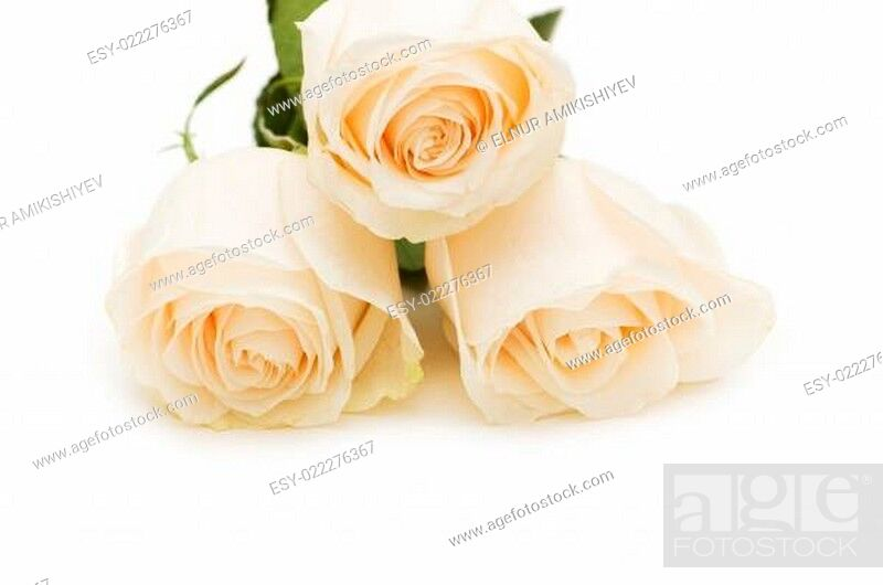 Stock Photo: Three roses isolated on the white background.