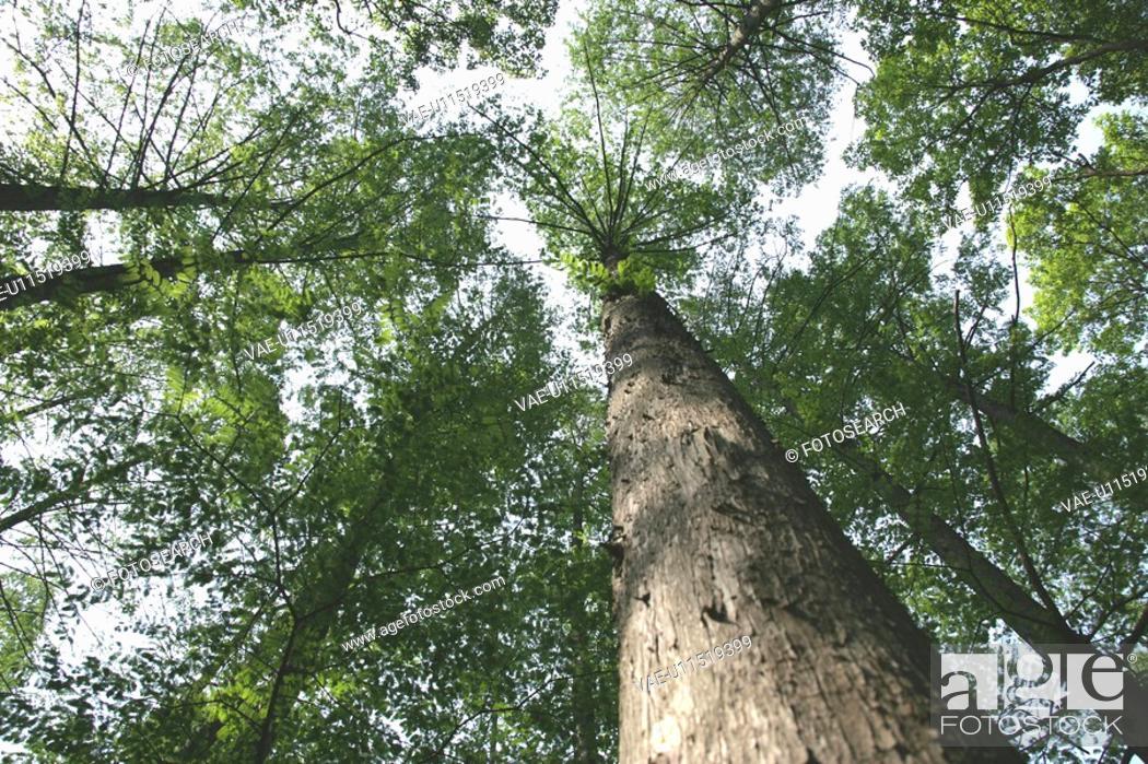 Stock Photo: A Tree.