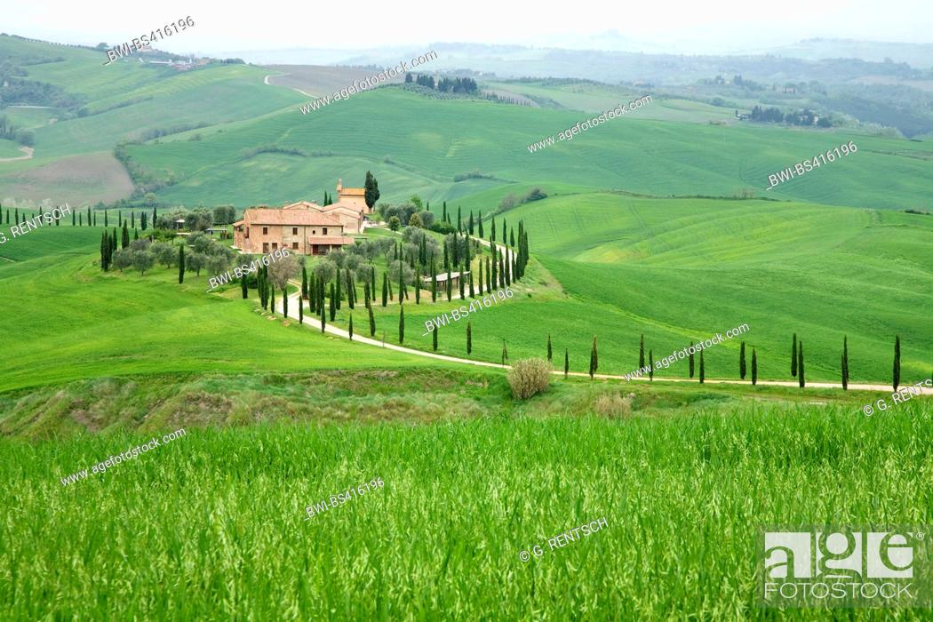 Stock Photo: farmhouse in hilly field landscape with cypress alley in spring, Italy, Tuscany, Siena.