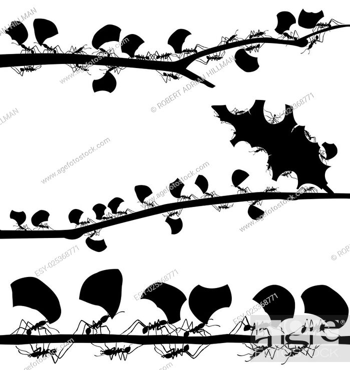 Stock Vector: Set of EPS8 editable vector silhouettes of leaf cutter ants with all leaf fragments and ants as separate objects.